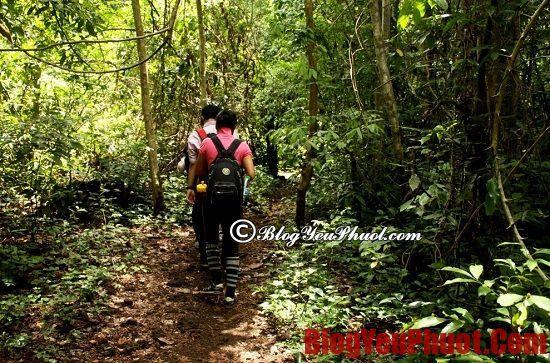 Đi phượt rừng cần chuẩn bị những gì? Chia sẻ kinh nghiệm đi phượt rừng an toàn nhất