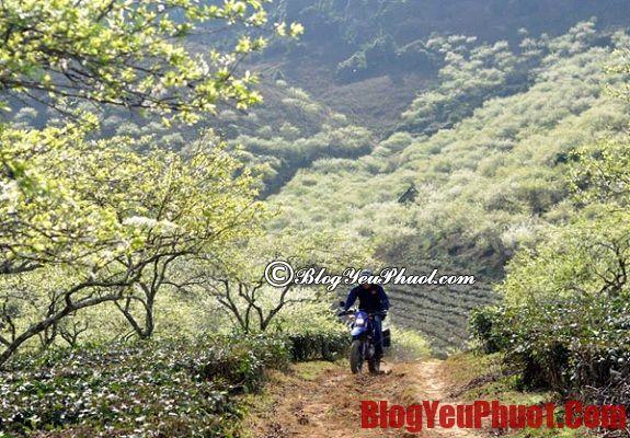 Du lịch Mộc Châu bằng xe máy
