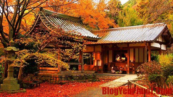Ăn gì khi du lịch Nhật Bản? Những món ăn nổi tiếng của Nhật Bản
