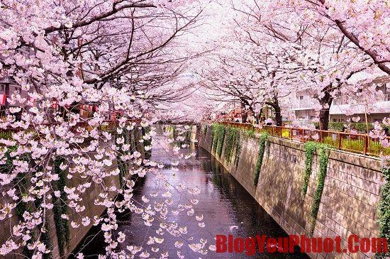 Nên du lịch Nhật Bản vào mùa nào?