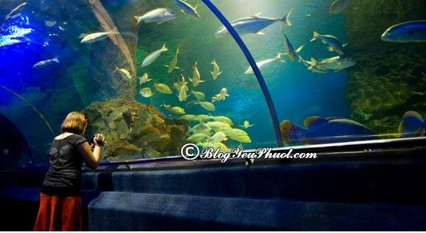 Những địa điểm du lịch nổi tiếng ở Nha Trang: Nơi tham quan, vui chơi thú vị, hấp dẫn ở Nha Trang