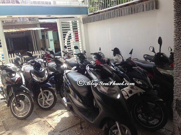 Địa chỉ thuê xe máy giá rẻ ở Đà Nẵng: Quán cho thuê xe máy ở Đà Nẵng an toàn, đẹp, chất lượng