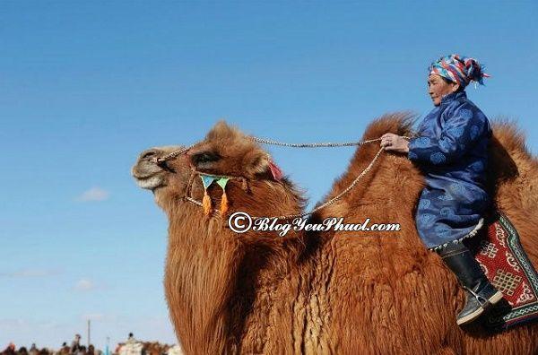 Lưu ý khi đi du lịch Mông Cổ, hướng dẫn xin visa du lịch Mông Cổ nhanh nhất