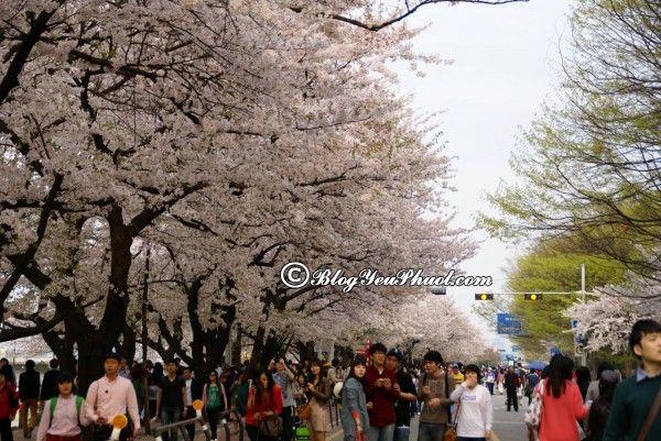 Kinh nghiệm du lịch Seoul - thời điểm đẹp nhất đi du lịch Seoul