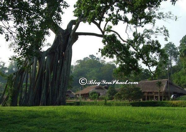 Hướng dẫn du lịch Tuyên Quang tự túc, giá rẻ: Tuyên Quang có địa điểm du lịch nào đẹp, nổi tiếng?