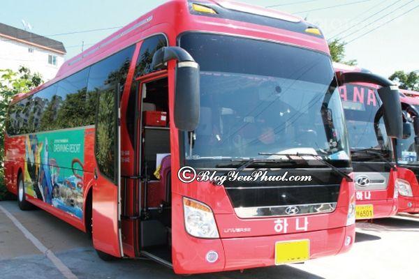 Phương tiện đi lại khi du lịch Busan - Đi du lịch Busan bằng xe bus rất tiết kiệm