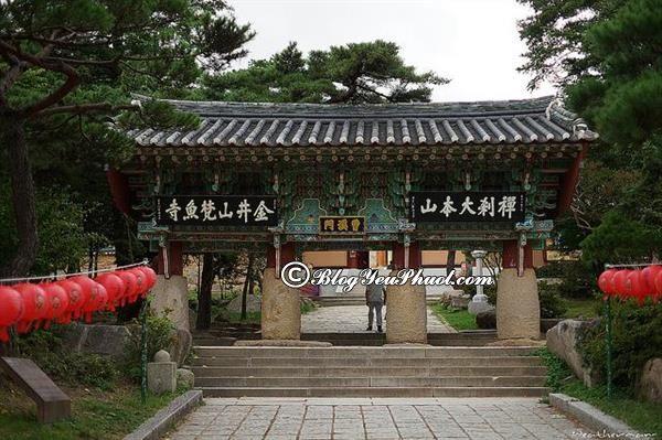Điểm đến khi đi du lịch Busan không thể bỏ lỡ là đền beomeosa: Tư vấn lịch trình vui chơi, khám phá khi đi du lịch Busan