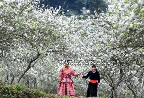 Mộc Châu là địa điểm tham quan, du lịch lý tưởng dịp 30/4 - 1/5 ở Miền Bắc