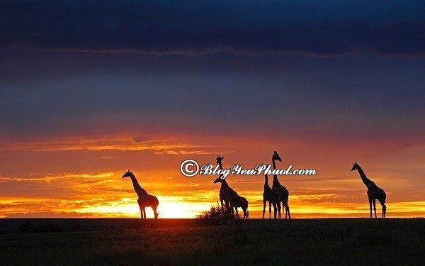 Kinh nghiệm du lịch Kenya