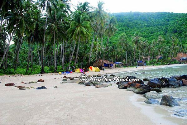Ở đâu khi du lịch đảo Cồn Cỏ? Địa điểm tham quan, vui chơi khi du lịch đảo Cồn Cỏ