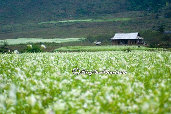Kinh nghiệm du lịch Mộc Châu mùa hoa cải- Thời điểm đẹp nhất đi du lịch Mộc Châu mùa hoa cải
