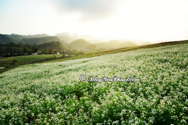 Đến đâu khi du lịch Mộc Châu mùa hoa cải?- Cánh đồng hoa cải, địa điểm ngắm hoa cải đẹp ở Mộc Châu