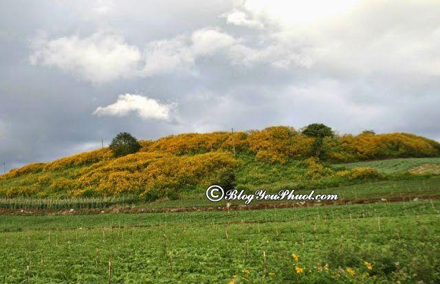 Cung đường săn hoa dã quỳ đẹp nhất tại Đà Lạt: Săn hoa ở đâu Đà Lạt đẹp, nổi tiếng nhất?