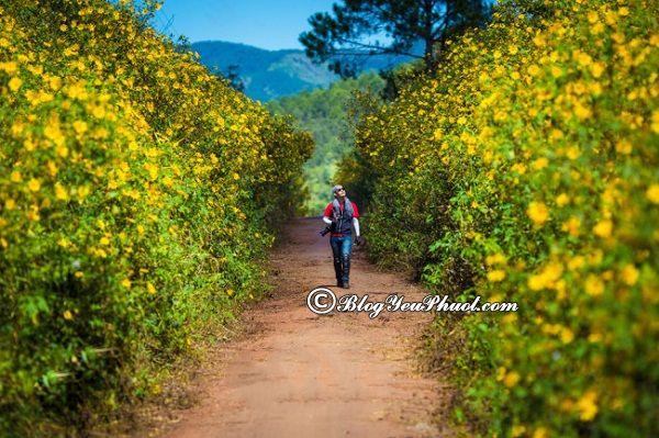 Cung đường ngắm hoa Dã Quỳ đẹp nhất tại Đà Lạt: Đi đâu ngắm hoa dã quỳ ở Đà Lạt? Địa điểm ngắm hoa dã quỳ đẹp, nổi tiếng ở Đà Lạt