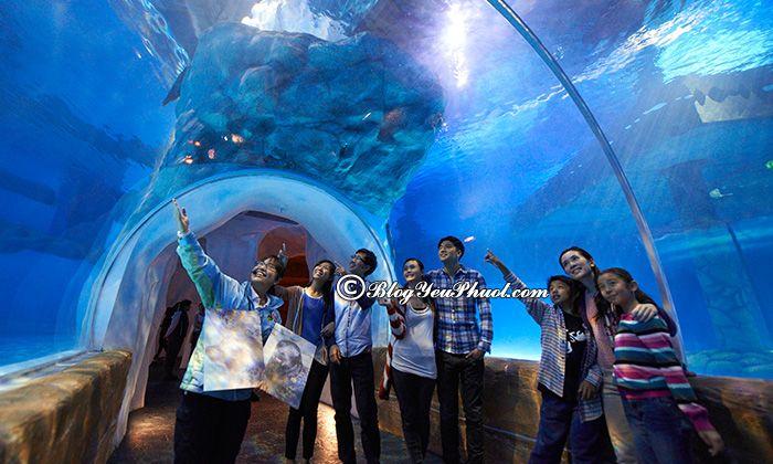 Đi Ocean Park Hong Kong như thế nào? Địa điểm tham quan ở Ocean Park Hong Kong đẹp, thú vị