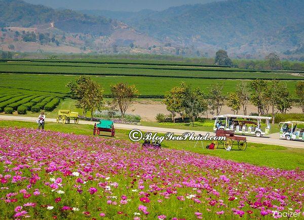 Kinh nghiệm du lịch Chiang Rai - Thăm Công viên nông trại Singha, tour du lịch Chiang Rai giá rẻ