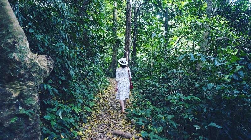 Kinh nghiệm phượt rừng Cúc Phương Ninh Bình