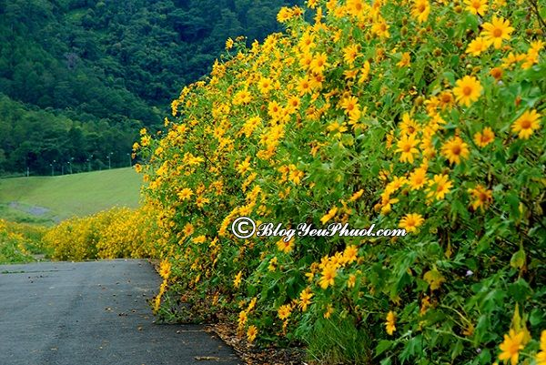Mùa hoa nở đẹp nhất vào tháng 10- Hoa Dã Quỳ: Nên đi thưởng hoa ở đâu vào tháng 10?
