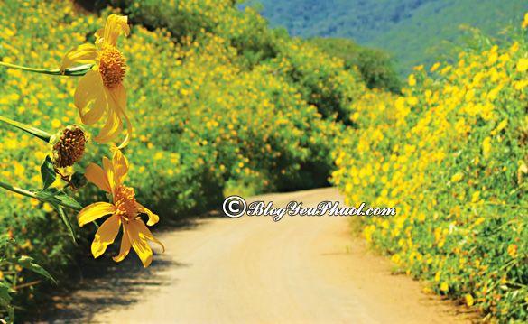 Mùa hoa nở đẹp nhất vào tháng 10: Tháng 10 có hoa nào nở, nên đi chơi ở đâu?