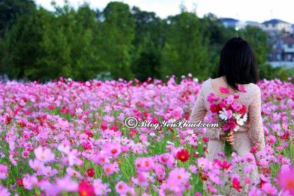 Vườn hoa đẹp nổi tiếng ở Hà Nội- Vườn hoa Bách Nhật: Địa chỉ ngắm hoa đẹp vào tháng 10