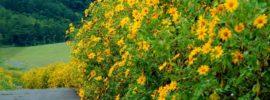 Những mùa hoa đẹp nhất ở Đà Lạt