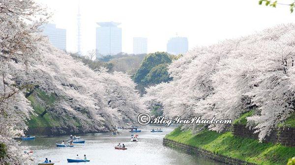 Các địa điểm tham quan nên tới ở Tokyo: Nơi ngắm cảnh, chụp ảnh đẹp ở Tokyo nên tới du lịch
