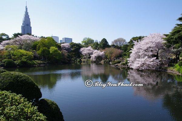 Các địa điểm tham quan nên tới ở Tokyo: Danh lam thắng cảnh đẹp ở Tokyo