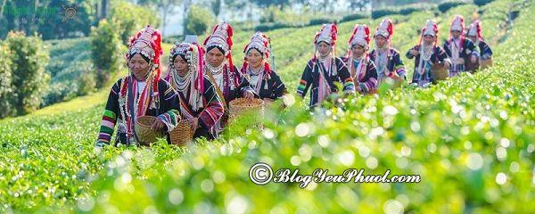 Địa điểm tham quan đẹp, nổi tiếng ở Chiang Rai: Du lịch Chiang Rai đi đâu chơi, tham quan?