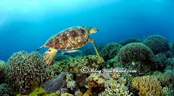 Các địa điểm du lịch nổi tiếng tại Philipines: Nên đi chơi ở đâu khi đến Philippines du lịch?