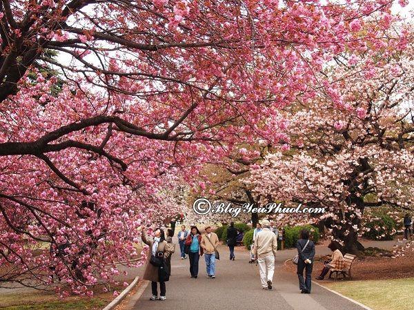 Du lịch hàn quốc mùa nào đẹp nhất? Thời điểm lý tưởng đi du lịch Hàn Quốc