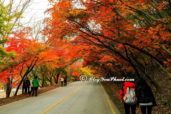 Du lịch hàn quốc mùa nào đẹp nhất? Nên đi Hàn Quốc thời gian nào, tháng mấy?