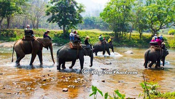 Du lịch phuket có gì hay, chơi gì? Những trò chơi thú vị, vui nhộn ở Phuket
