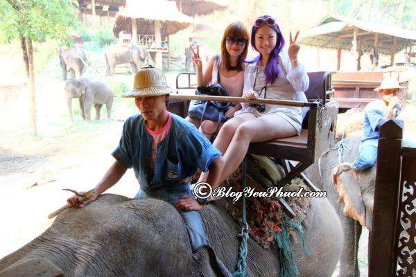 Kinh nghiệm du lịch chùa Vàng Wat Traimit Bangkok: Hướng dẫn đi tham quan chùa Vàng Wat Traimit Bangkok