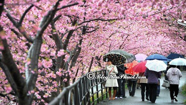 Thời điểm đẹp nhất để du lịch Nhật Bản: Nên đi Nhật Bản chơi mùa nào, tháng mấy?