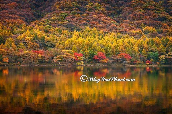 Nên du lịch Nhật Bản vào thời điểm nào? Khi nào đi du lịch Nhật Bản đẹp nhất?