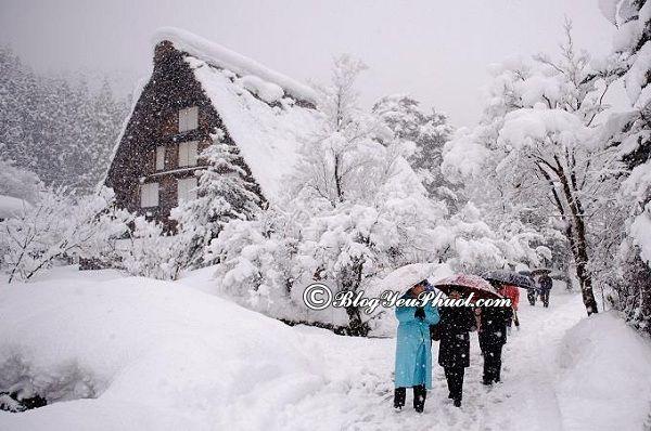 Nên du lịch nhật bản vào thời gian nào? Du lịch Nhật Bản mùa nào, tháng mấy đẹp nhất?