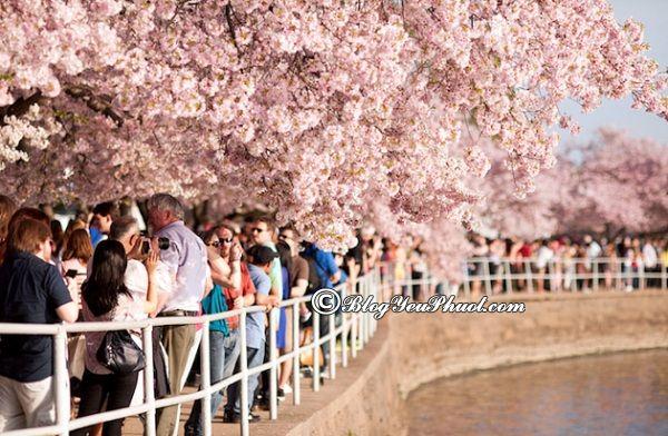 Những lễ hội lớn, nổi tiếng nhất ở Hàn Quốc: Tháng mấy Hàn Quốc có lễ hội?