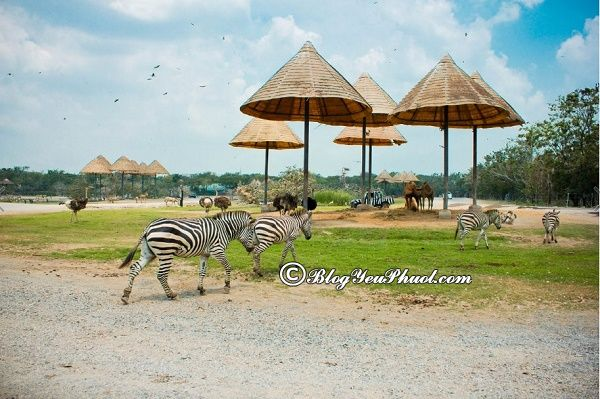 Sở thú nổi tiếng ở Bangkok: Nên cho trẻ em đi đâu chơi khi du lịch Bangkok?
