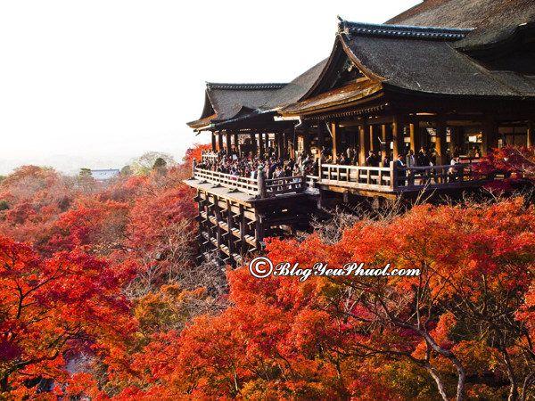 Du lịch Kyoto nên đi đâu chơi