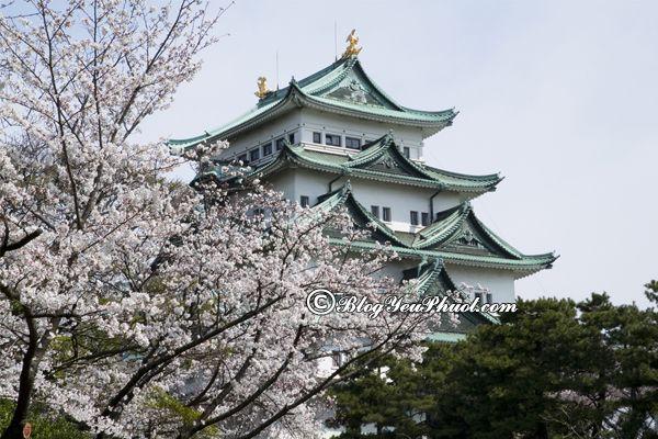Đi đâu khi du lịch Nagoya? Danh lam thắng cảnh đẹp, nổi tiếng ở Nagoya