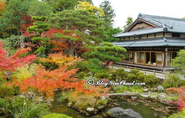 Kinh nghiệm du lịch Nara