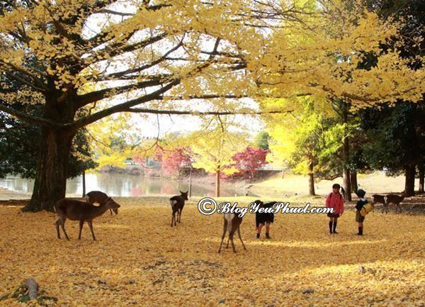 Du lịch Nara vào thời điểm nào đẹp nhất? Kinh nghiệm, hướng dẫn đi tham quan, vui chơi ở Nara