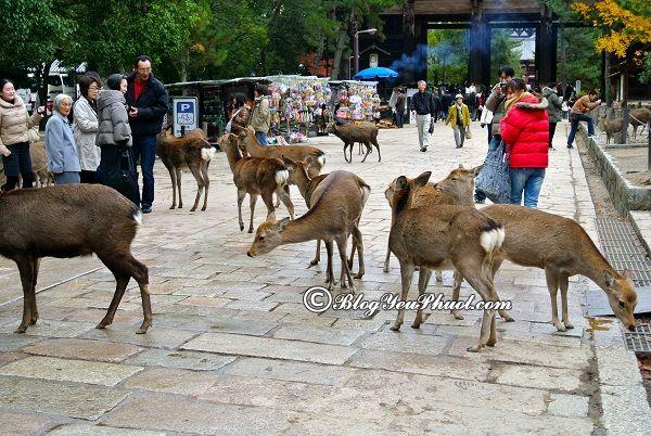 Đi đâu khi du lịch Nara? Du lịch Nara đi đâu chơi, tham quan, chụp ảnh, ngắm cảnh đẹp nhất?