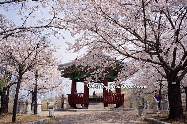 Du lịch Okinawa mùa nào đẹp nhất? Danh lam thắng cảnh đẹp, nổi tiếng ở Okinawa