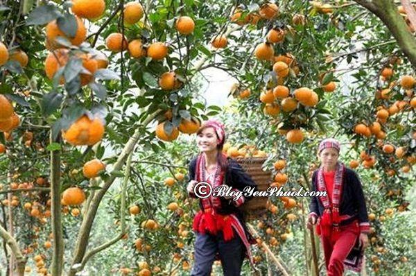 Món quà phải mua về khi du lịch Hà Giang: Du lịch Hà Giang nên mua gì về làm quà, mua ở đâu?