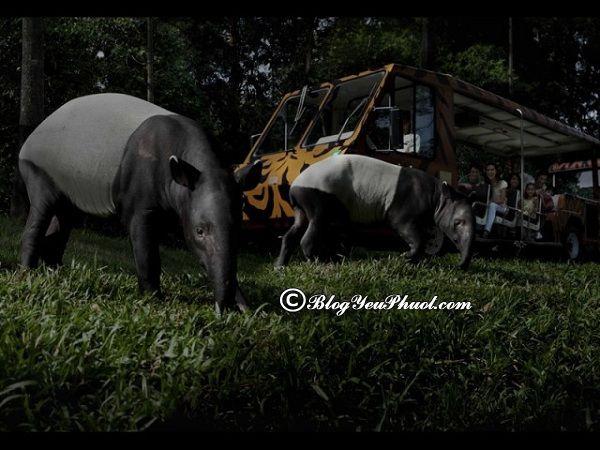 Có gì thú vị tại sở thú Singapore? Địa chỉ các sở thú nổi tiếng ở Singapore