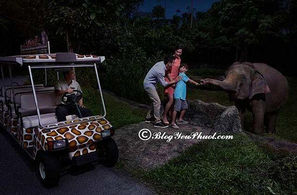 hướng dẫn đi chơi sở thú ở singapore: Du lịch, tham quan sở thú ở Singapore cần lưu ý điều gì?