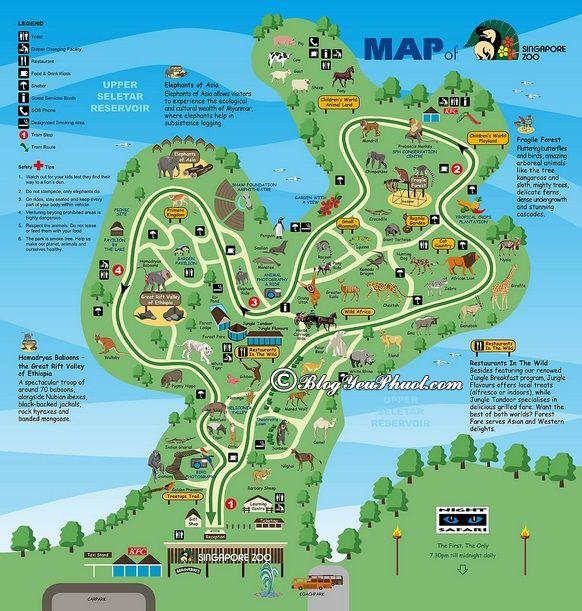 Du lịch, tham quan vườn bách thú ở Singapore cần lưu ý điều gì? Kinh nghiệm đi chơi ở sở thú Singapore