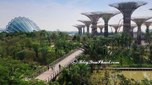 Kinh nghiệm đi chơi Gardens by the Bay giá rẻ: Du lịch Gardens by the Bay có gì hấp dẫn?