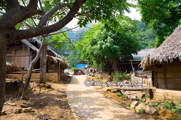 Lịch trình phượt rừng quốc gia Xuân Sơn: Hướng dẫn đi du lịch, tham quan vườn quốc gia Xuân Sơn